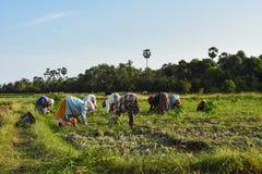 La vita dell'agricoltore fotografie stock libere da diritti