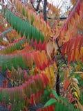La vita della natura dalla nascita alla morte in fiori fotografia stock libera da diritti