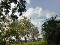 La vita di tatto dell'albero del cielo si rilassa Fotografie Stock