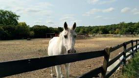 La vita di un cavallo immagine stock libera da diritti