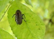 La vita di un insetto reincarnata e rinata fotografia stock libera da diritti