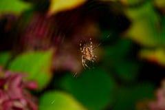 La vita di un ragno Fotografia Stock Libera da Diritti