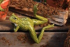 La vita di una rana Immagine Stock