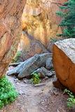 La voûte bascule des Colorado Rockies de paysage Photographie stock libre de droits