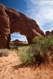La voûte d'arbre de pin arque le stationnement national Moab Utah Image stock