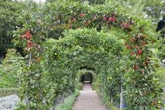 La voûte de pommier dans un anglais d'été font du jardinage Photos libres de droits