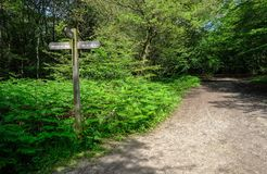 La voie de forêt avec le poteau indicateur a placé dans une correction des fougères photographie stock