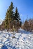 La voie de ski entre dans les bois Image libre de droits