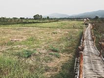 La voie en bambou parmi le champ vert Images stock
