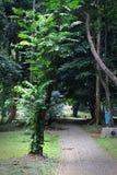 La voie en parc Image libre de droits