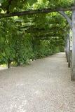 La voie par la vigne a couvert le pergola au château, De, villandry, loire, vallée, France Images stock