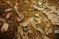 La voie parmi les bois image stock