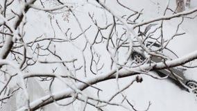 La voiture couverte par neige est garée en parc de ville un jour de neige d'hiver, vu d'en haut par des branches d'arbre banque de vidéos