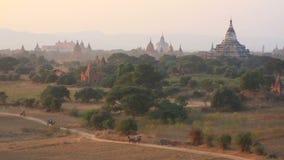 La voiture de cheval dans la plaine de Bagan au coucher du soleil, Bagan, Myanmar banque de vidéos