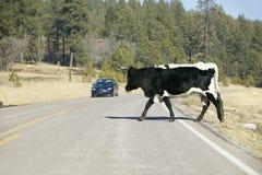 La voiture s'arrête pour la grande route de croisement de taureau dans l'ouvert-gamme de la réserve indienne de Mescalero Apache, Photographie stock