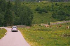 La voiture va sur la route par un pré Photographie stock