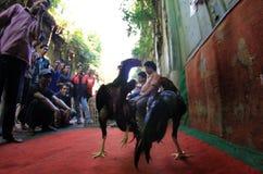 La volaille lancent sur le marché Photo libre de droits
