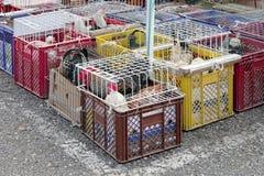 La volaille lancent sur le marché Photos stock