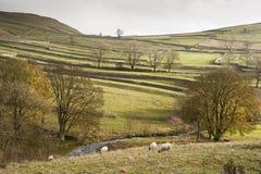 La vue à travers des zones vers Malham ratisse en vallées de Yorkshire image libre de droits