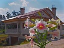 La vue étroite de a monté lilly avec la maison de campagne au fond photos stock