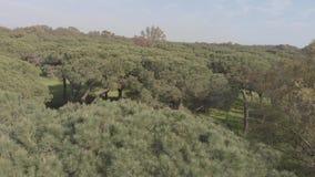 La vue aérienne de bourdon scénique au-dessus du méditerranéen merveilleux frottent des pins domestiques clips vidéos