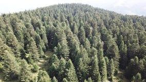 La vue aérienne de la forêt de sapin dans Pyrénées a filmé avec un bourdon, France banque de vidéos