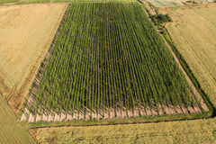 La vue aérienne de l'élevage saute à cloche-pied dans une plantation de houblon Image libre de droits