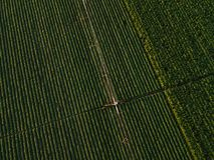La vue aérienne de l'équipement d'irrigation arrosant le soja vert cultive Photos libres de droits