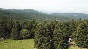 La vue aérienne du pré et de la forêt de sapin dans Pyrénées a filmé avec un bourdon, France banque de vidéos