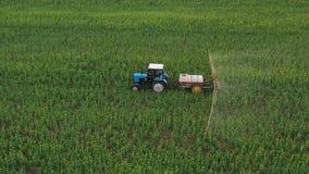 La vue aérienne du tracteur traite les usines agricoles sur le champ banque de vidéos