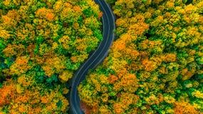 La vue aérienne simple de la route dans la chute a coloré des bois Image libre de droits