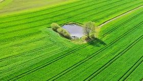 La vue aérienne sur le petit lac d'étang aiment avec des arbres et des buissons sur le grand champ oasis verte photos stock