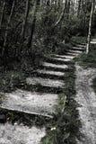 La vue abstraite du sentier piéton extérieur et les étapes voient escalader une colline au bord d'un secteur de forêt photo libre de droits