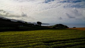La vue au thé met en place à l'île de Miguel de sao, Açores, Portugal Photographie stock libre de droits