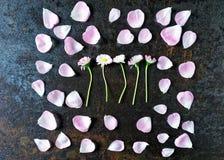 La vue avec des pétales des roses et de la marguerite de thé rose fleurit Photographie stock