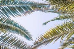 La vue d'angle d'Uprisen de la noix de coco part avec la couleur fraîche du fond de ciel bleu de la plage photographie stock libre de droits