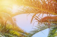 La vue d'angle d'Uprisen de la noix de coco part avec la couleur fraîche du fond de ciel bleu de la plage images libres de droits