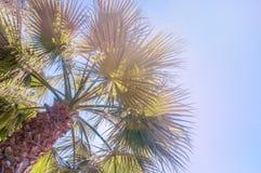 La vue d'angle d'Uprisen de la noix de coco part avec la couleur fraîche du fond de ciel bleu de la plage photo stock