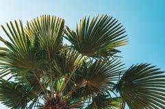 La vue d'angle d'Uprisen de la noix de coco part avec la couleur fraîche du fond de ciel bleu de la plage image stock