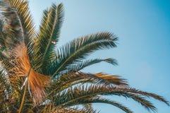 La vue d'angle d'Uprisen de la noix de coco part avec la couleur fra?che du fond de ciel bleu de la plage photographie stock
