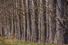 La vue d?taill?e des arbres parall?les sur les herbes mettent en place photo stock