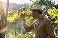 La vue de c?t? du jeune homme dans le chapeau regardant la vigne part photographie stock