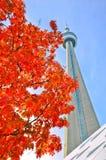 La vue de l'arbre d'érable rouge et la NC dominent en automne Photographie stock