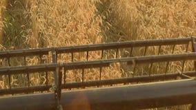 La vue de l'habitacle de la moissonneuse de cartel recueille le blé au coucher du soleil Moisson du champ de grain, saison de cul banque de vidéos