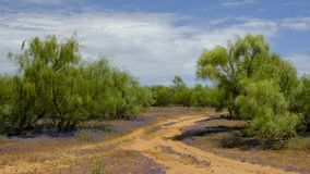 La vue de l'indigène frottent la fleur espagnole de couverture végétale de jacinthes des bois en bois, près de la Castille De Don photo stock