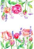 La vue de l'les fleurs sauvages et les roses s'embranche Guirlande florale d'une lavande Image libre de droits