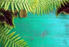 La vue de la fougère et du coleus frais part sur la vieille turquoise peinte Photo libre de droits