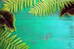 La vue de la fougère et du coleus frais part sur la vieille turquoise peinte Image libre de droits