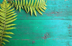 La vue de la fougère fraîche part sur le vieux CCB en bois peint de turquoise Images stock