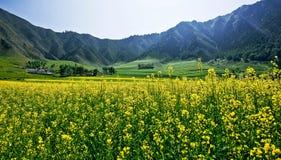 La vue de Menyuan, le Qinghai 4 Image libre de droits